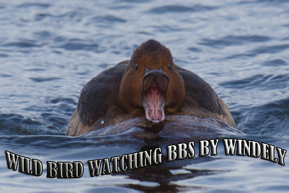 Wild Bird Watcher BBS by windely.com